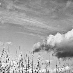 Once upon a time I saw a cloud passing by. (Daniel Iván) Tags: clouds cloud cloudscape cloudy landscape deutschland germany abstract abstracto paisaje nube nubes blackwhite blackwhitephotography blackwhitephoto blackandwhite blackwhitephotos square cuadrada blancoynegro fotografíablancoynegro trees tree árbol árboles cielo sky neatsky