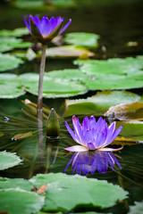 Lily (bdrc) Tags: asdgraphy closeup nature sony a6000 alpha minolta 75300mm tele zoom outdoor bukit jalil park garden flora fauna flower lily plant f4556