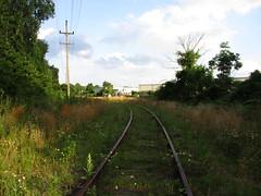 (tehshadowbat) Tags: abandoned tracks byberry road northeastphiladelphia philadelphia philadelphiaandreading siding overgrown trains railroad rail walkingtherails abandonedtracks
