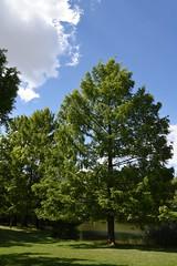 sDSC_1893 (L.Karnas) Tags: wien vienna wiedeń вена 維也納 ウィーン viena vienne austria österreich 2017 frühling spring june juni kurpark oberlaa