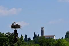 DSC_3975 (franckp64) Tags: fagagna oasideiquadris cicognabianca coppia stork ciconia