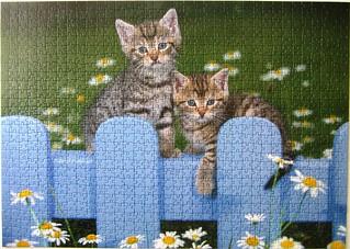 Kätzchen [am blauen Zaun]