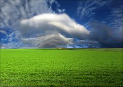Closeness (Katarina 2353) Tags: landscape photopainting green field katarinastefanovic katarina2353 sky agriculture