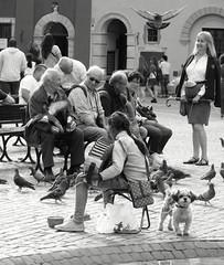 Pigeons (Aga Dzięcioł) Tags: pigeons gypsy girl oldmen oldtown warsaw busker musician puppy friend friends listen sound