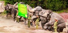 Eid al- Fitr Mubarak | Selamat Hari Raya Aidilfitri (Jabid.Ishtiaque) Tags: singapore zoo elephant show eid muslim religious occasion