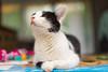 Ursula (Alfred Bold / Neubruch Photography / Moosburg GANZ) Tags: ursula cat katze sonya7 happy glücklich sw beautiful schön geniesen zeiss