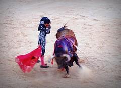 derechazo (aficion2012) Tags: istres francia france corrida bullfight bull toro toros taureau fundi elfundi juan pedro domecq tauromachie tauromaquia matador torero toreo