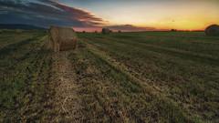 Balas de paja (teredura58) Tags: paja balas campo cereales atardecer
