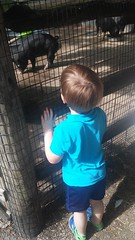 """Paul at the Deanna Rose Children's Farmstead • <a style=""""font-size:0.8em;"""" href=""""http://www.flickr.com/photos/109120354@N07/35567821821/"""" target=""""_blank"""">View on Flickr</a>"""