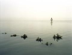 Drowned World (Bruce Buckman) Tags: sea seascape fog mist manukau auckland newzealand mangroves tide film 120film kodakportra160 bronicaetrs zenzanoneii75mmf28