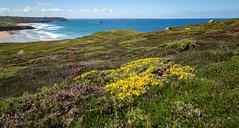 Paradise in Finistère (khan.Nirrep.Photo) Tags: finistère flower fleur bretagne breizh bleu blue beach beauté iroise litoral océan ocean canon canon6d longexposure mer seascape 24105mm f4 simply superb