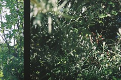 (Aramar) Tags: film canoneos500n expiredfilm analog 35mm fujipro160c