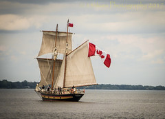 St. Lawrence II (13skies) Tags: canada party 150 years old celebration flag history pride proud tallships burlingtoncanal thehammer steeltown hamilton fun sailing sonyalpha99 13skies stlawrenceii lakeontario canadaday july1st holiday water freshwaterlake