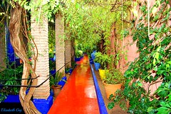 MAROCCO 01-2015 149 (Elisabeth Gaj) Tags: maroco012015 elisabethgaj afryka travel marrakech garden natur nature
