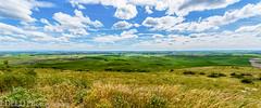 NT3.0091-WP170617_67246-Edit (LDELD) Tags: palouse washington steptoebutte fields wheat