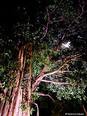 Trincomalee tree and full moon (Flor Saluzzo) Tags: srilanka trincomalee florenciasaluzzo tree fullmoon