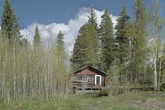 Hillside home (Rocky Pix) Tags: hillsidehome lumpgulchhighway cabin house mountain community postal mail boxes tolland trip moffattunnel mammoth valley housing unionpacific up drgw denverriograndewestern denvernorthwesternpacificrr dnwprr grade mammothpark denversaltlake dsl rollinsville rockypix rocky pix wmichelkiteleyf16 1125thsec 70mm 2470mmf28g nikkor normalzoom monopod