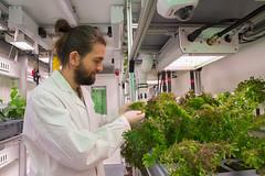 Conrad Zeidler prüft die Senfpflanzen (Salatsorte) im EDEN:ISS Gewächshaus