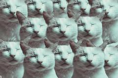 Madjo 12 @catsedition9 (Robert Krstevski) Tags: robertkrstevski robertkrstevskiblogspotcom photography photooftheday photograph photo photographer catsphotography catsedition9 cat cats pet pets animal animals animallovers animalslove kitty kitten kittens kitties кошки котка котки popular macedonia