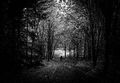Exit (MortenTellefsen) Tags: exit lysåpning lightning light forest skog skogsåpning solo bw blackandwhite blackandwhiteonly svarthvitt monocrome