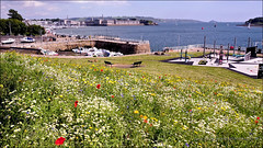 Beautiful Flowers , Beautiful View.... (PAUL Y-D) Tags: garden wild flower colours muttoncove plymouth devon water harbour boats rtamar plymouthsound landscaoe seascape gym openair