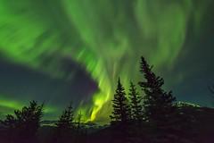 Northern Lights (Mirwais Azami) Tags: alberta northern lights northernlights aurora canada morainelake