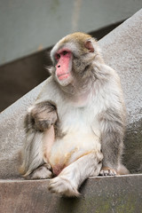 2017-07-08-17h31m57.BL7R4299 (A.J. Haverkamp) Tags: canonef100400mmf4556lisiiusmlens amsterdam noordholland netherlands zoo dierentuin httpwwwartisnl artis thenetherlands japansemakaak japanesemacaque nl
