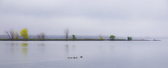 Ducks in a Row (Karma2c) Tags: autumn lakeshore ducks water mist lake