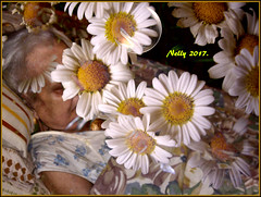 *R I P... (MONKEY50) Tags: mother art digital daisy rip psp colors flickraward pentaxart hypothetical soe musictomyeyes contactgroups awardtree artdigital autofocus july pentaxflickraward beautifulphoto 172017