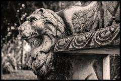 Les lions du jardin public-NB (o.penet) Tags: stone benches publicgardens bancs pierre honfleur normandy fleurs flowers blue red pink yellow mauve