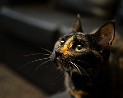 Gina (walterioju) Tags: carey gatos mascotas cats kitty nikon nikonargentina iamnikon d7000 35mm