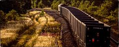 Twist and turn (Peter Leigh50) Tags: class 66 db cargo 66053 wistow box wagon train railway railroad trees track red light tail sunshine golden hour shadows grass willowherb rosebay