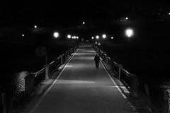 (cherco) Tags: oldman night noche negro nocturne nocturna solitario solitary silhouette shadow silueta sombra solo street shadows blackandwhite lonely composition composicion canon 5d road carretera