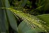 nature après la pluie (Instant Ephémère) Tags: nature feuilles plantes fleurs gouttes deau pluie macrophoto gouttelettes vert