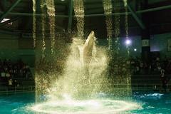 DSC00615 (Jun.Ohashi) Tags: aquaparkshinagawa aquarium shinagawa アクアパーク品川 品川 水族館 港区 東京都 日本 jp sony ソニー ilce9 α9 sonyalphaa9 a9 alpha9 tamronspaf2875mmf28xrdildasphericalifmacroa09 tamron タムロン sp 2875mm f28 di ld aspherical if macro a09