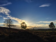 Woolmer Sundown (Marc Sayce) Tags: sundown sunset woolmer ranges forest conford whitehill longmoor south downs national park hampshire may spring 2017 trees