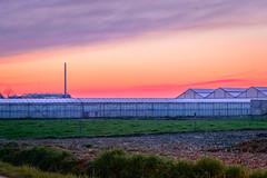 _DSC2531.jpg (Danpac photography) Tags: veld serre rural agrarisch zonsondergang sunset kleur colour