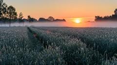 Sonnenaufgang im Brook (webpinsel) Tags: brook frühling frühnebel halternamsee landschaft morgendämmerung morgenstimmung natur sonnenaufgang sythen morgens