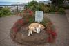 Madeira (Pieter Mooij) Tags: madeira cat foguete