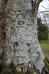 Mentions (Lucky Poet) Tags: balloch scotland bark carved initials names tree trunk