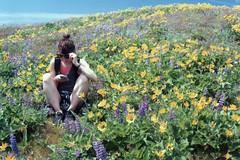 Regan 25, Coyote Wall 2017 (Sara J. Lynch) Tags: sara j lynch coyote wall hike hiking columbia river gorge national scenic area washington asahi pentax k1000 35mm film balsamorhiza lupinus lupine balsamroot yellow purple flower flowers wildflower wildflowers regan portrait cell phone