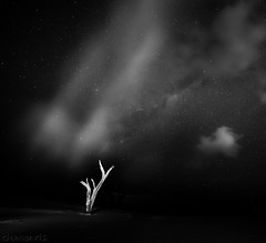 Lone Night Sky - DSC4580-18 (cleansurf2) Tags: night mood mirrorless minimual minimalism monotone background black bw white tree alone lone lonely longexposure nightscape stars cloud lightpainting simple sony surreal simplicity silent australia arty a7ii abstract dark fantasy dream glow hd landscape natural nature explore squares tones deset dunes ilce7m2 mygearandme