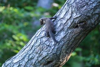La jeunesse au Rdv.Martre des pins