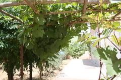 Canopy of trees (Jiyan Foundation) Tags: jiyan foundation humanrights chamchamal iraq irak garden therapy psychotherapy rehabilitation healinggarden kurdistan
