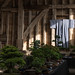 Annual  Bonsai Exhibition. Kingsbury Barn built 1374