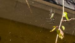 Spiders Web...