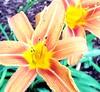 (jolynn_) Tags: flowers allxpressus