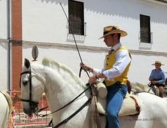 Día de san Isidro. Romería  en Alameda (Málaga) (lameato feliz) Tags: caballo jinete alameda romería fiesta
