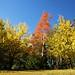 Alfred Nichols Memorial Garden - arboretum (PsJeremy) Tags: