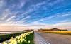 The Flower Road. (Alex-de-Haas) Tags: 1635mm d750 dutch dutchskies hdr holland hollandseluchten lowcountries nederland nikkor nikkor1635mm nikon nikond750 noordholland thenetherlands avond beautiful bloemen bloemenbijeenkomst bloemenveld bloemenvelden bright daffodil daffodils daglicht daylight depthoffield evening field flower flowerfields flowerbed fullframe highdynamicrange kleuren kleurrijk laagland landscape landscapephotography landschap landschapsfotografie lente licht light lucht luchten mooi narcis narcissen narcissus nature natuur plant plat polder serene skies sky spring sun sundown sunny sunset tripod zon zonnig zonsondergang